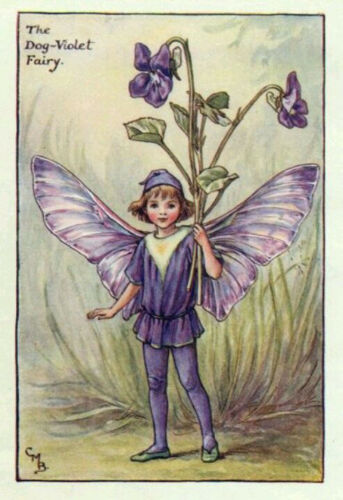Fleur 100 Graines non traitées de VIOLETTE Reine Charlotte Viola odorata