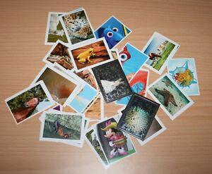 39 REWE Sticker aus der Serie &quot; Abenteuer Tierwelt&quot; - <span itemprop='availableAtOrFrom'>Gotha, Deutschland</span> - 39 REWE Sticker aus der Serie &quot; Abenteuer Tierwelt&quot; - Gotha, Deutschland