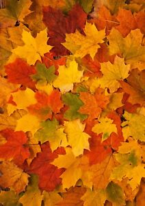 Details About Autumn Fall Leaves Leaf Wallpaper A4 Sized Edible Wafer Paper Icing Sheet