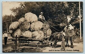 Postcard-KS-Barton-County-Load-of-Exaggerated-Cabbages-RPPC-1908-Real-Photo-S4