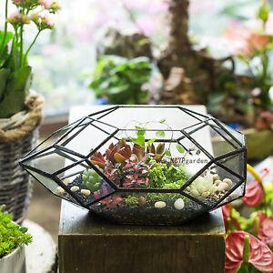 Geometric Ball Shape Plants Glass Terrarium Planter Pot Box