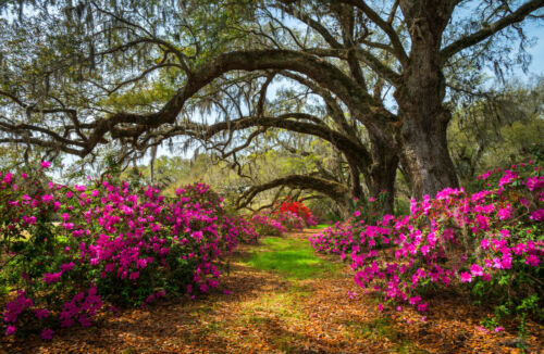 -Garten Natur Blumen Blüten Pflanzen VLIES Fototapete-SPRING FLOWERS- 1071V
