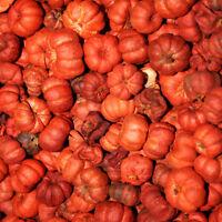 Orange Putka Pods Mini Pumpkins Limited Supply 8 Oz