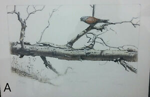 Signed-amp-Numbered-Charles-Frizzell-Hunter-Stone-Lithograph-Tree-Bird-Kestrel