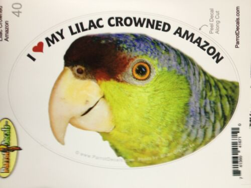 Lilac Crowned Amazon Parrot Exotic Bird Vinyl Decal Bumper Sticker
