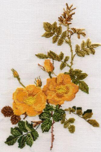 Rosa Amarilla puntada cruzada contada Kit o gráfico 14s Aida