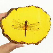 Beautiful Amber Dragonfly Fossil Insects Manual Polishing Decorative Pieces