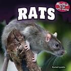 Rats by Rachel Lynette (Hardback, 2013)