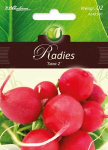 Semences Radis//Radies Saxa 3