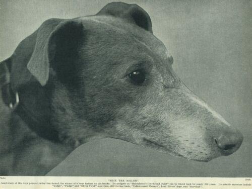 GREYHOUND MICK THE MILLER HEAD STUDY ORIGINAL OLD 1934 DOG PRINT PAGE