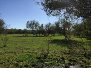 Rancho ganadero en venta en  colonia La Manga  en  Hermosillo, Sonora.