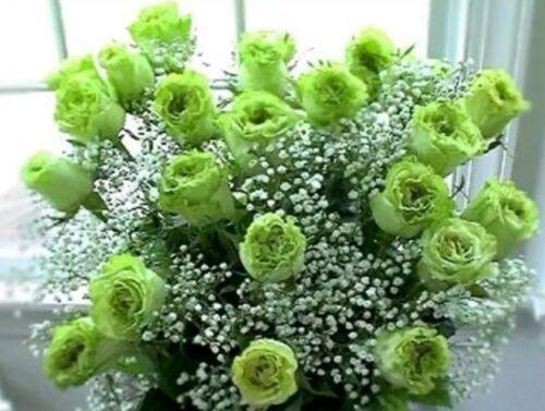 """Rose Seeds SELLER Rose Flower Seeds /""""Green/""""  U.K"""