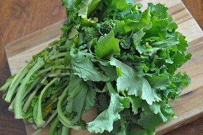 Broccoli Rabe (300 seeds) - Organic Heirloom from Life-Force Seeds