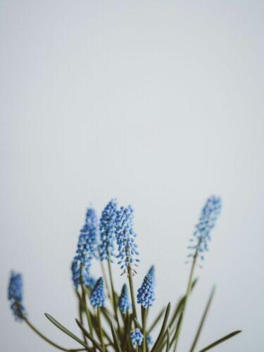 Blumen x00472 Wand Deko Leinwand Bilder