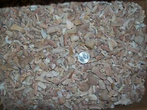 200 Pc 1//4 pound of Fossil Moroccan Sand Tiger Sharks Teeth tooth shark A GRADE