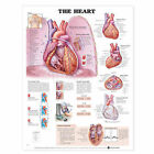 The Heart Anatomical Chart by Anatomical Chart Co. (Fold-out book or chart, 2000)