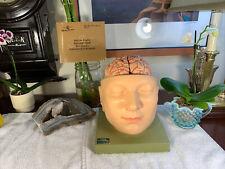 Vintage Somso Base Of The Head Anatomical Model Excellent Shape Rare Booklet