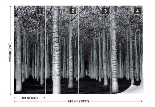 1X-33419 Birch Tree Trunks Rows Lanes Woodland Photo Wallpaper Wall Mural