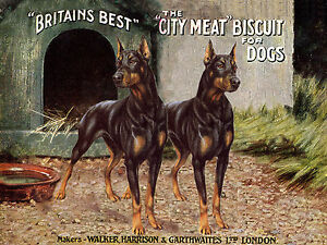 Doberman Pinscher Two Dogs Old Dog Food