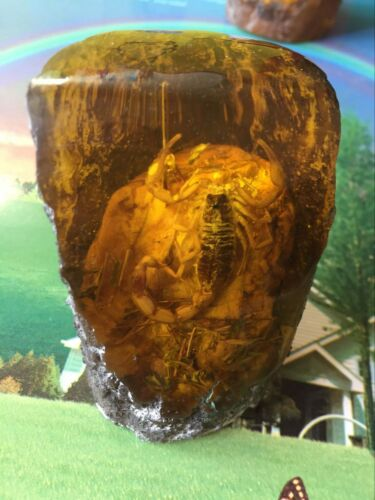 Oriental antique hand natural amber scorpion hot statue The collection decoratio