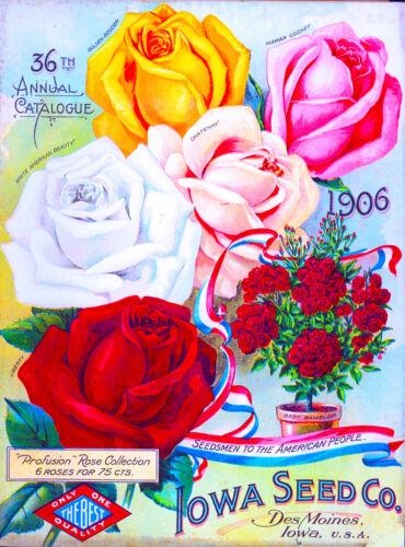 1906 Iowa Seed Roses Vintage Flowers Seed Packet Catalogue Advertisement Poster