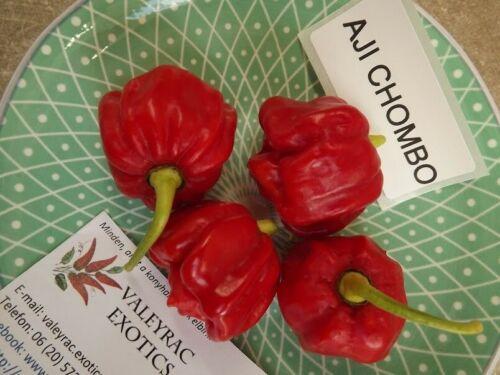 5 HOT and PRODUCTIVE! seeds Aji Chombo chili