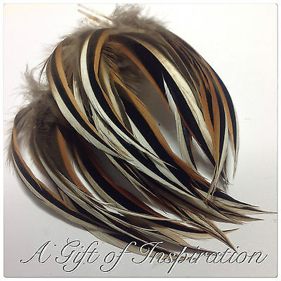 5 x 10-13cm Natural Tri-colour Mallard Drake feathers craft/millinery/flyfishing
