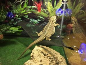 image is loading reptile hammock breathable mesh bearded dragon  reptile lizard  reptile hammock breathable mesh bearded dragon reptile lizard      rh   ebay