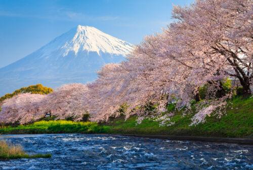 350x260cm 370p 7 voies 50x260cm-Japon montagne rivière Papier peint-FUJI ET SAKURA