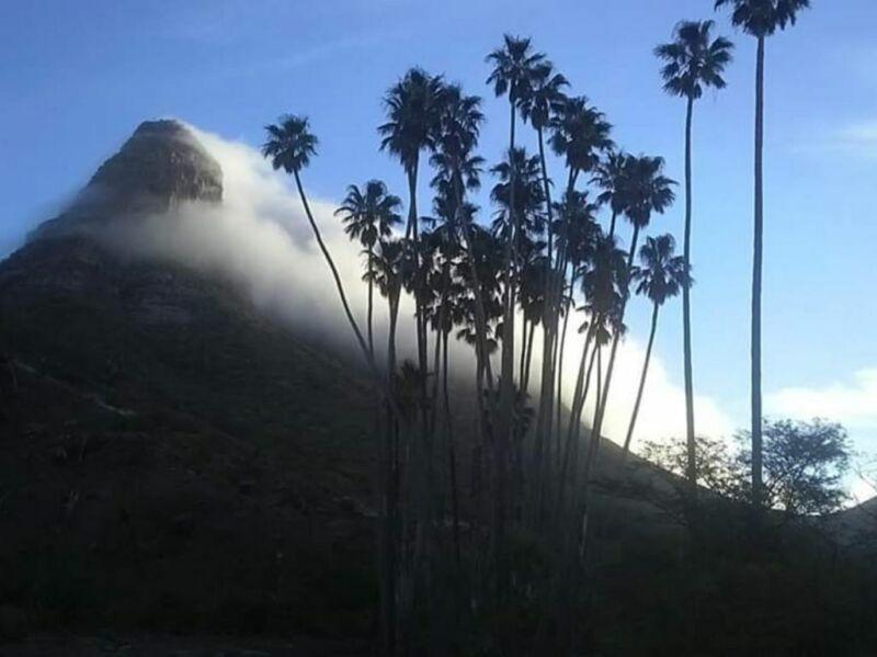 Venta de predio La Borreguera en Comondú, BCS
