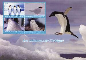 Congo-2018-CTO-ARCTIC-ANIMALI-CIVETTA-DELLE-NEVI-4-V-M-S-PINGUINI-GUFI-Fraticelli-birds-stamps