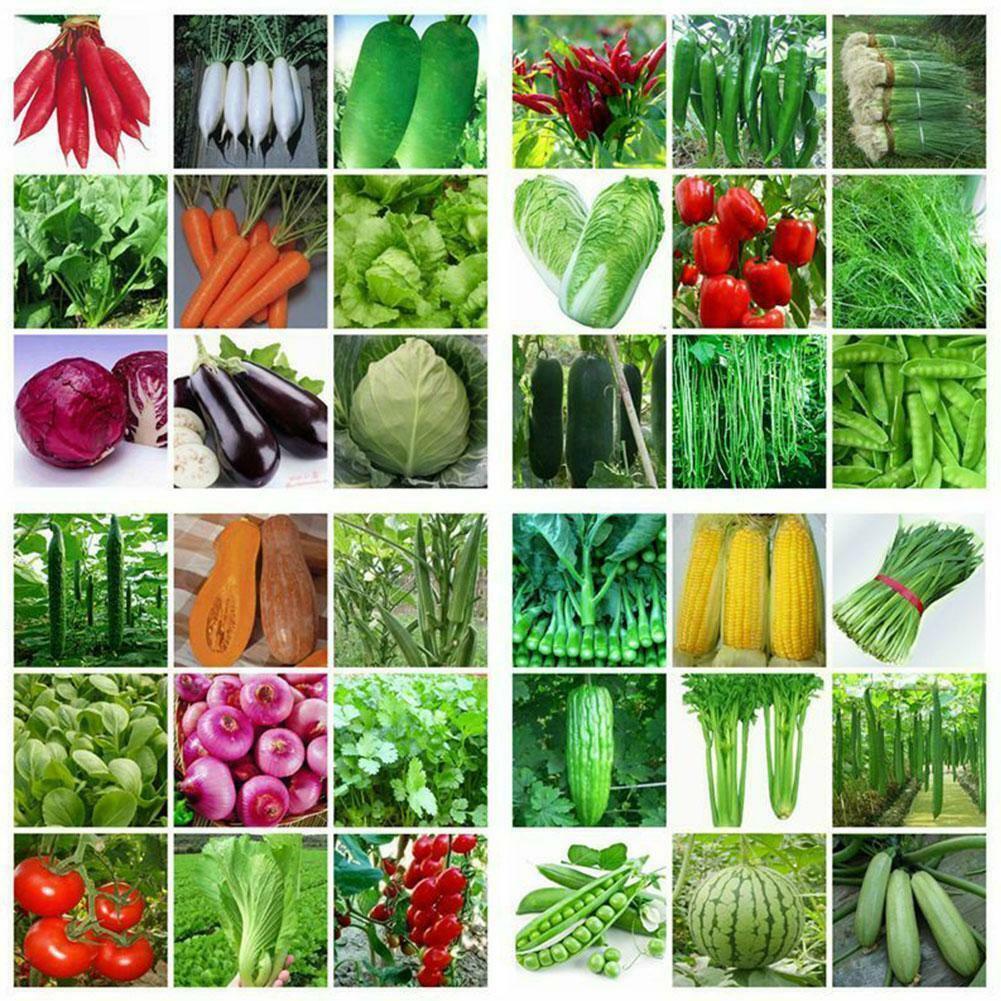 100pcs/bag Vegetable Garden Seeds Non Gmo Hybrid Organic Survival Plant Bank Lot