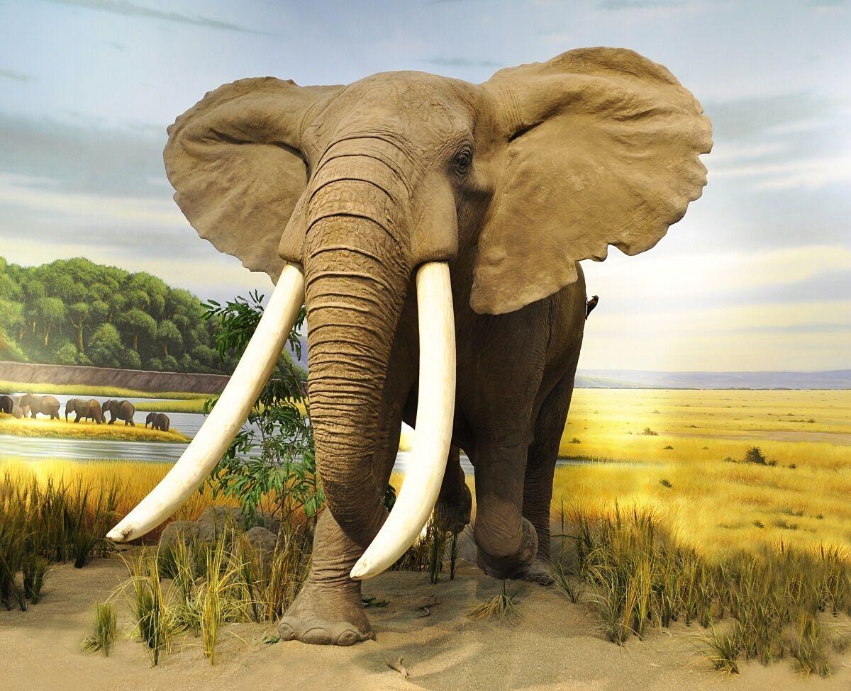 3D Lawn Elephants 75 WallPaper Murals Wall Print Decal Wall Deco AJ WALLPAPER