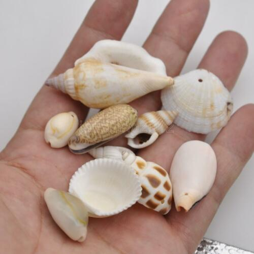 10pcs mixed shell bead Spacer necklace pendant pendants Beads 15-45mm