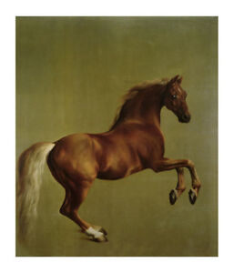 Whistlejacket by George Stubbs on Framed Canvas Pictures City Artwork Prints