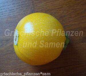 zucchini one ball zartes gem se 5 samen k rbis rund gelb f1 saatgut ebay. Black Bedroom Furniture Sets. Home Design Ideas