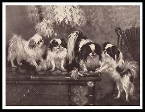 JAPANESE CHIN DOG GROUP LOVELY VINTAGE STYLE SEPIA DOG ART PRINT POSTER
