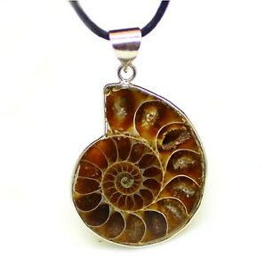 Polished ammonite fossil pendant necklace ebay image is loading polished ammonite fossil pendant necklace mozeypictures Images