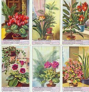 LIEBIG : S_1574 : 'Plantes ornementales d'intérieur