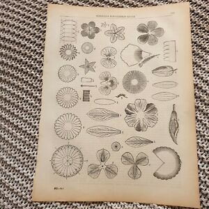 Paper-Flower-Making-1881-Book-Page