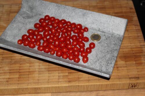 Johannisbeertomate Minitomate red Currant Wildtomate 15 Samen