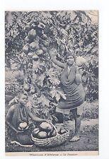 AFRIQUE scenes types ethnies missions  Ethnics femmes récolte fruits papayer