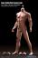 PHICEN-TBLeague-1-6-scale-Steel-Skeleton-Male-MUSCULAR-SEAMLESS-FIGURE-Body-USA thumbnail 3