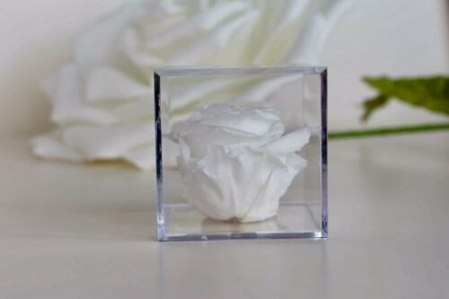 Eternal Rose Preserved Flower With Crystal Box Best Wish Gift For Special Ones