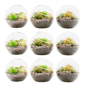 9pcs Globe Clear Glass Terrarium Container Flower Plant Pot Vase