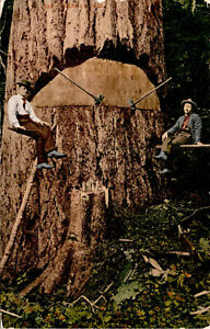Men-with-Giant-Tree-Axes-Sequoia-Redwood-Lumber-Vintage-Photo-Postcard-G03