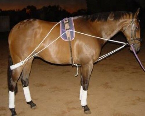 Horse Lungeing Training SystemHelps Build Top  Line & Engaging Hind Quarters  retail stores
