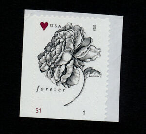 2015-US-Vintage-Rose-Scott-4959-MNH-Plate-Single-Flower-Engraved