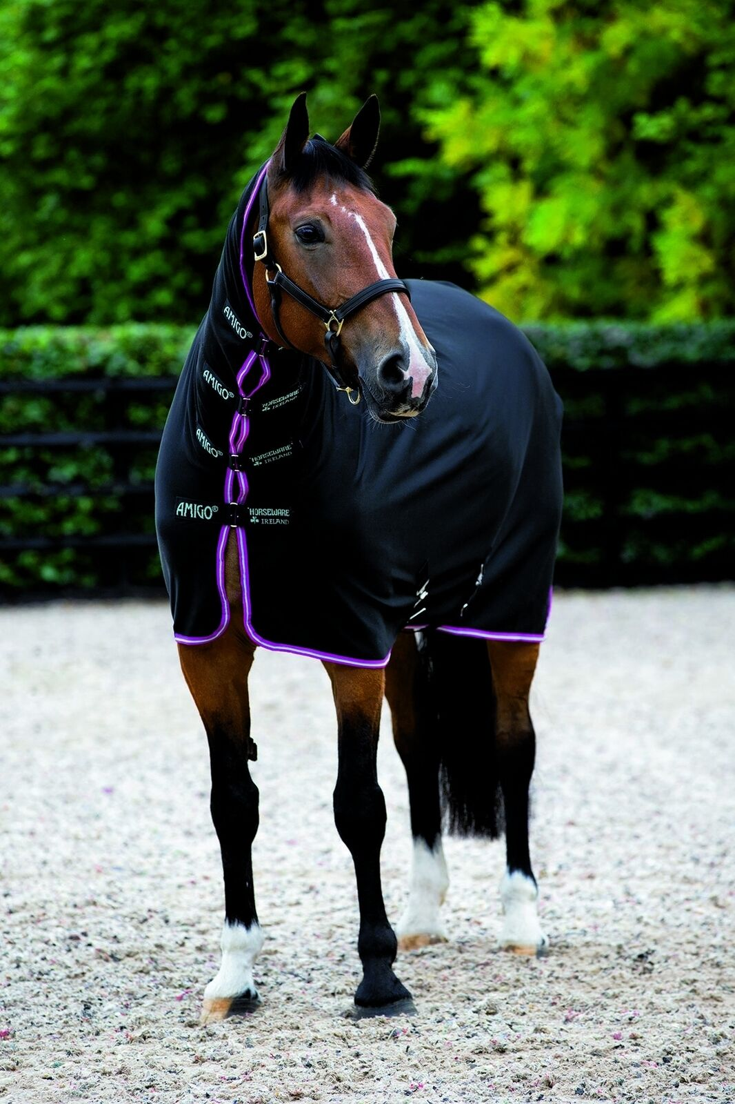 Horseware Amigo All-in-One Jersey Jersey All-in-One Cooler e3310f