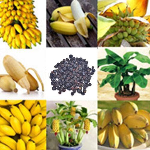 100pcs Rare Dwarf Banana Tree Seeds Mini Bonsai Garden Plant Exotic FruitsRASK